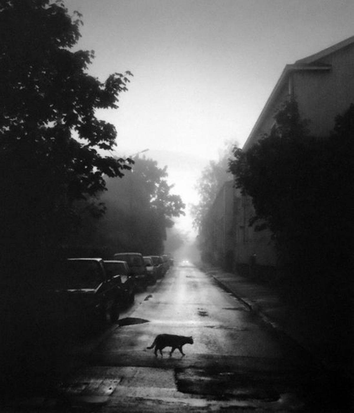 Pentti Sammallahti Helsinki, Finland, Cat Crossing the Street, 2000.jpg