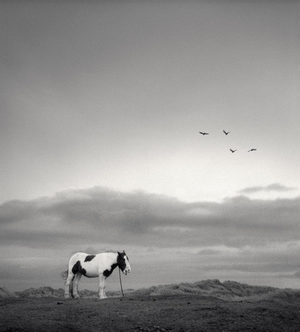 Lonely horse, England, 1998.jpeg