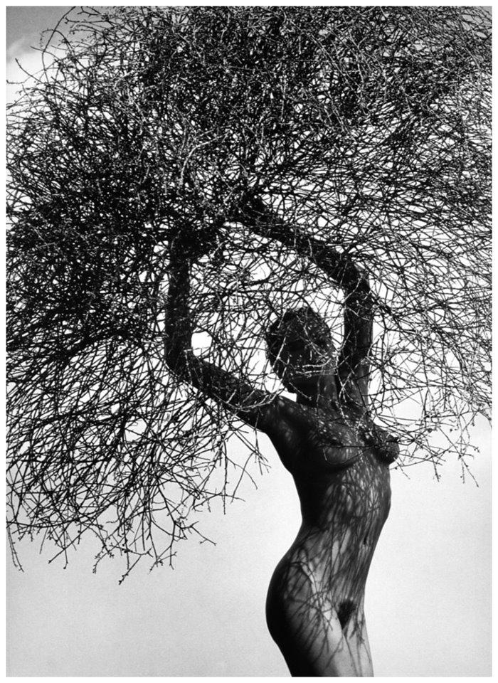 허브 리치 누드 나무가지를 든 네이트 Neith with Tumbleweed 1986 photo herb rittsb.jpg