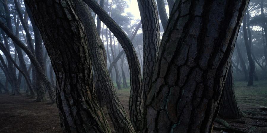 배병우-소나무01.jpg