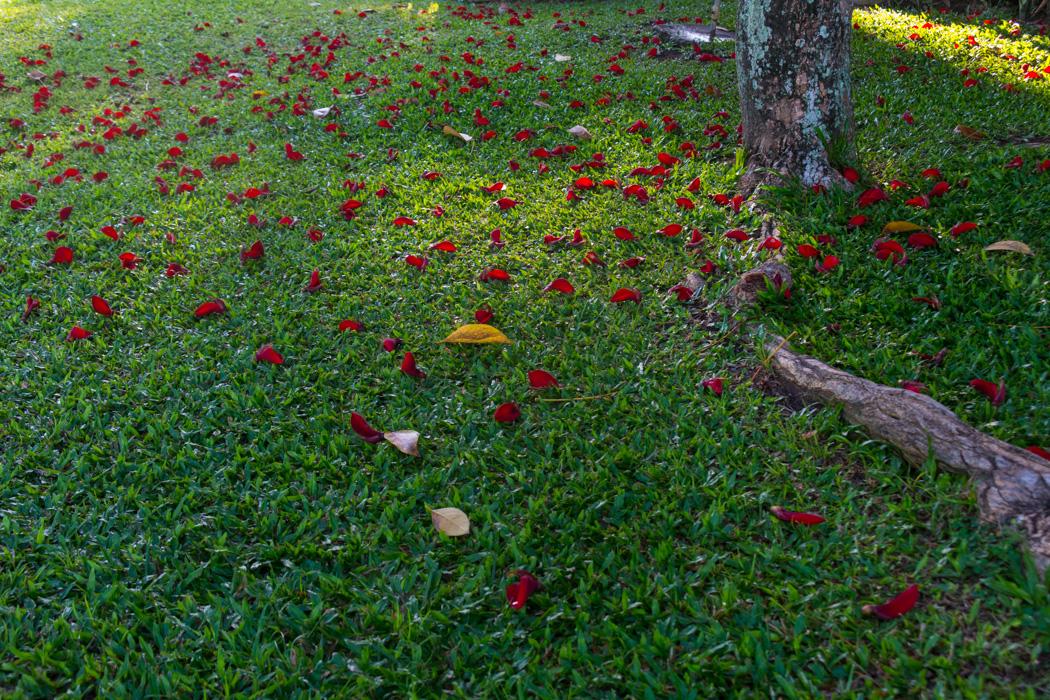꽃을 찍다_코타키나발루-04234800.jpg