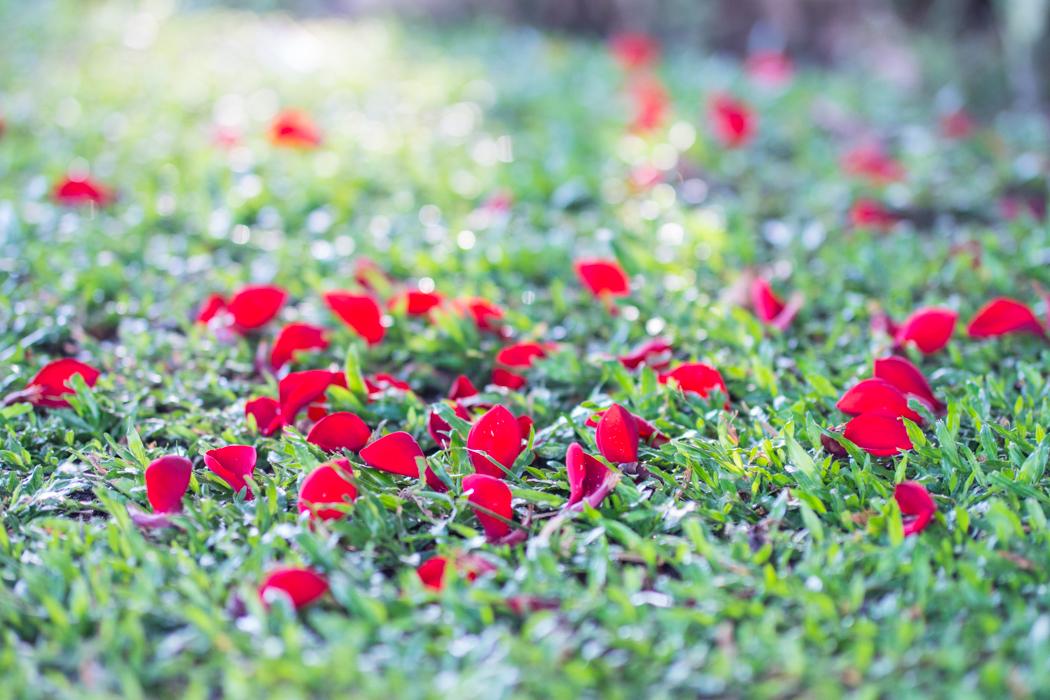 꽃을 찍다_코타키나발루-04234807.jpg