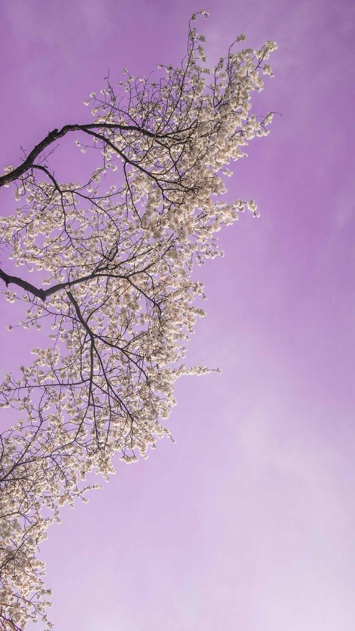 경기도청에서 벗꽃을 만나다-0302-3.jpg