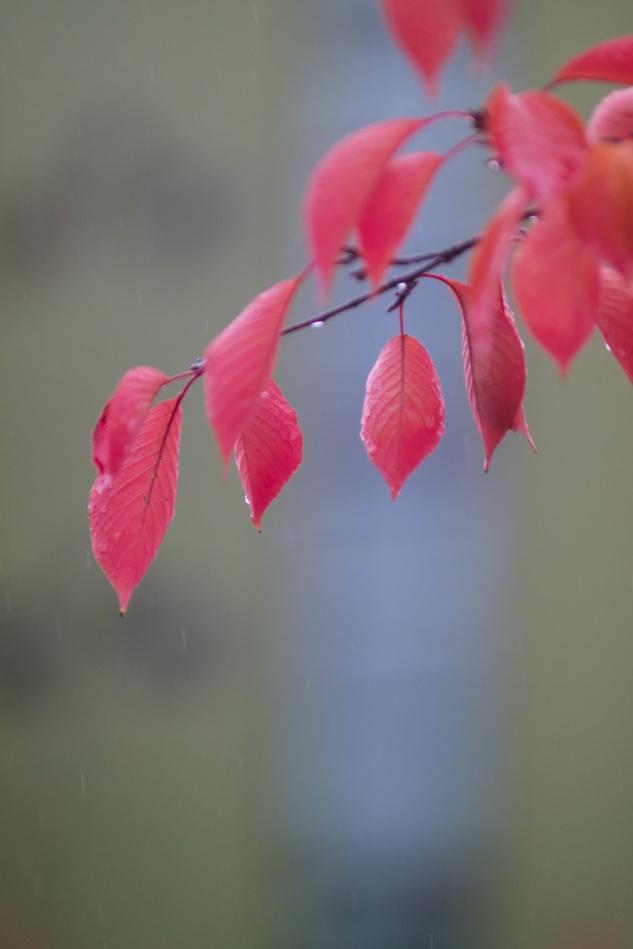 산벚나무 잎새-6739.jpg