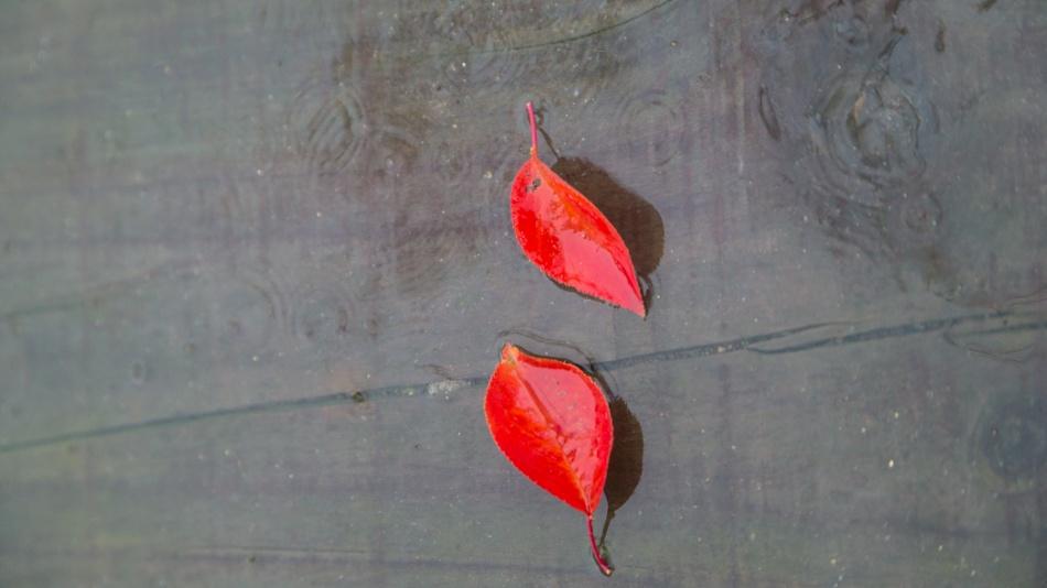 우중의 낙엽-6690.jpg