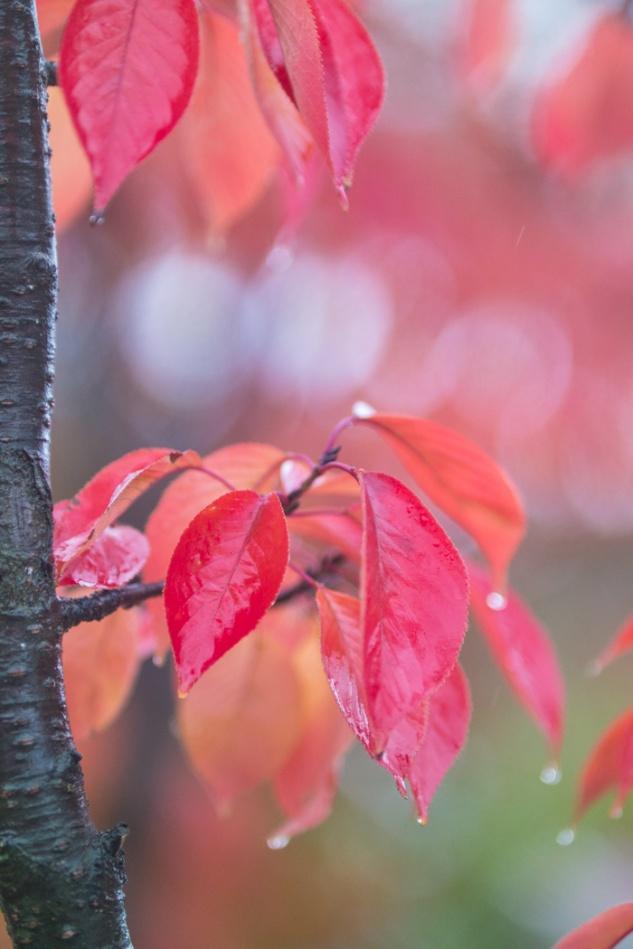 산벚나무 잎새-6765.jpg