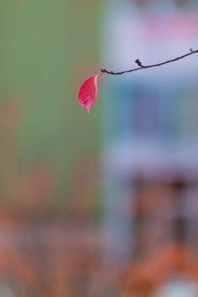 마지막잎새-6743.jpg