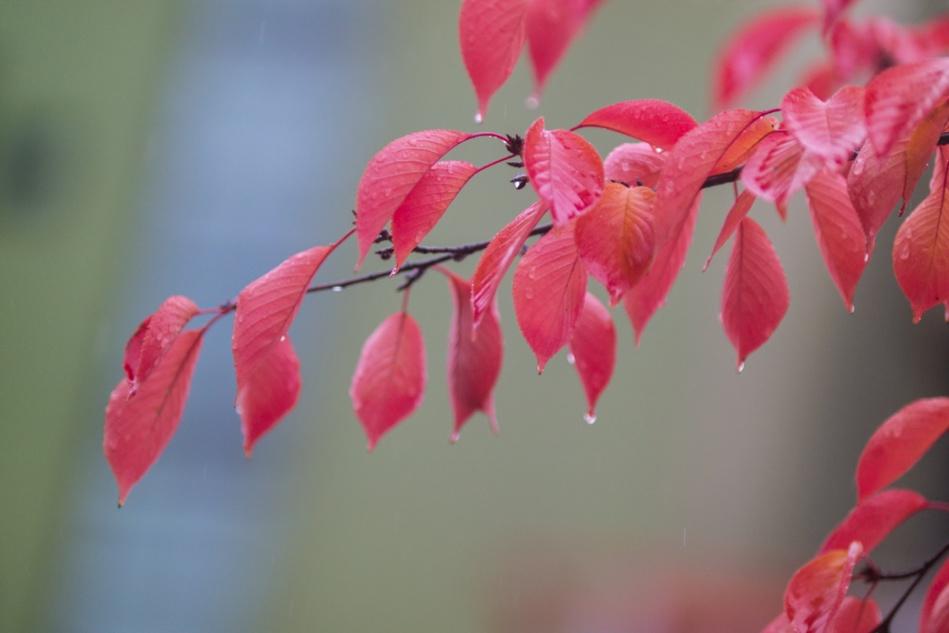 산벚나무 잎새-6782.jpg
