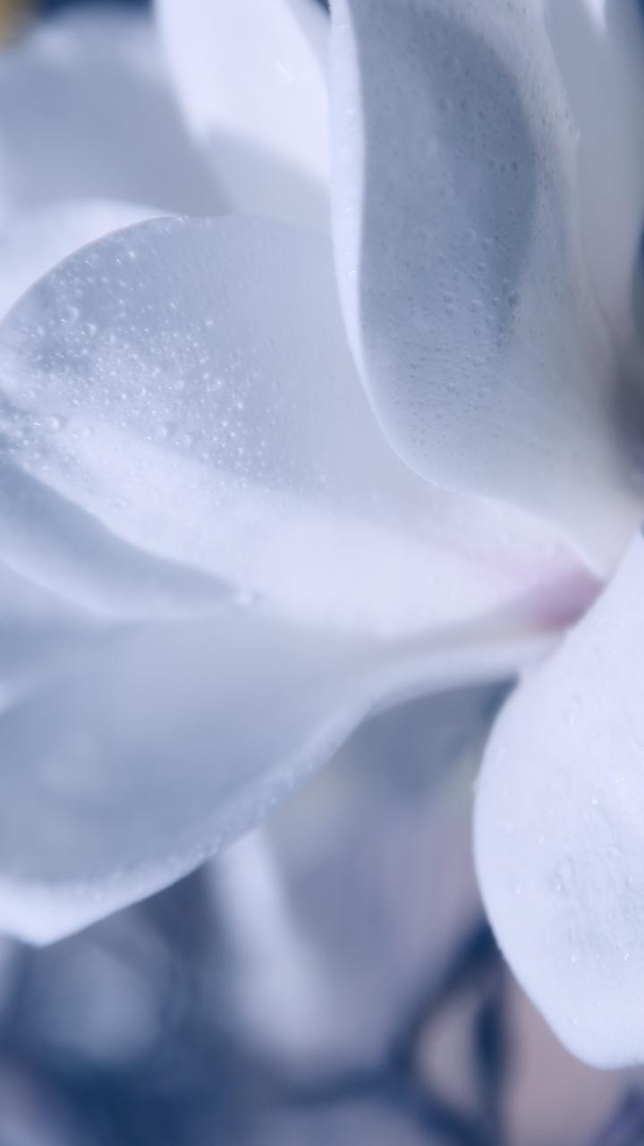 목련꽃-13.jpg