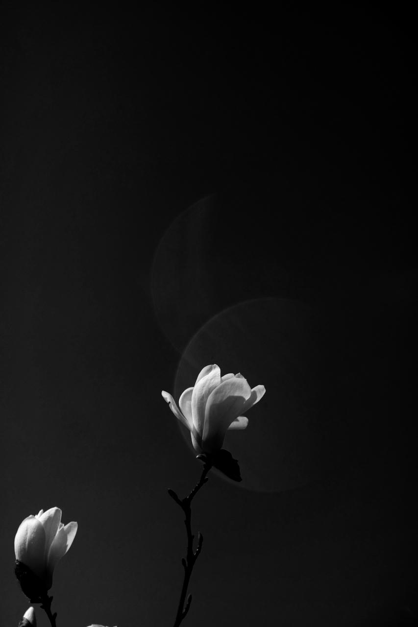 목련꽃 _ 해무리 블랙-05.jpg
