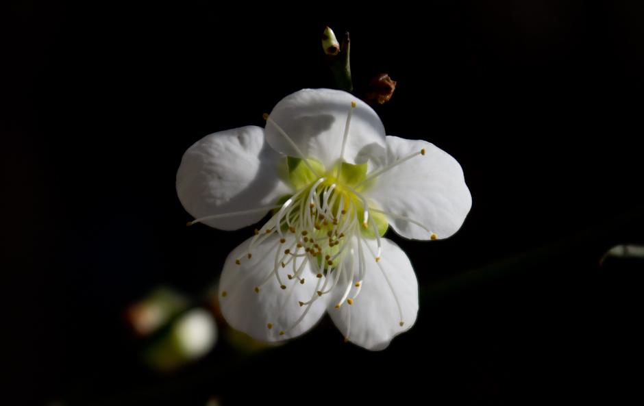 11년봄에 찍은 꽃-4593.jpg