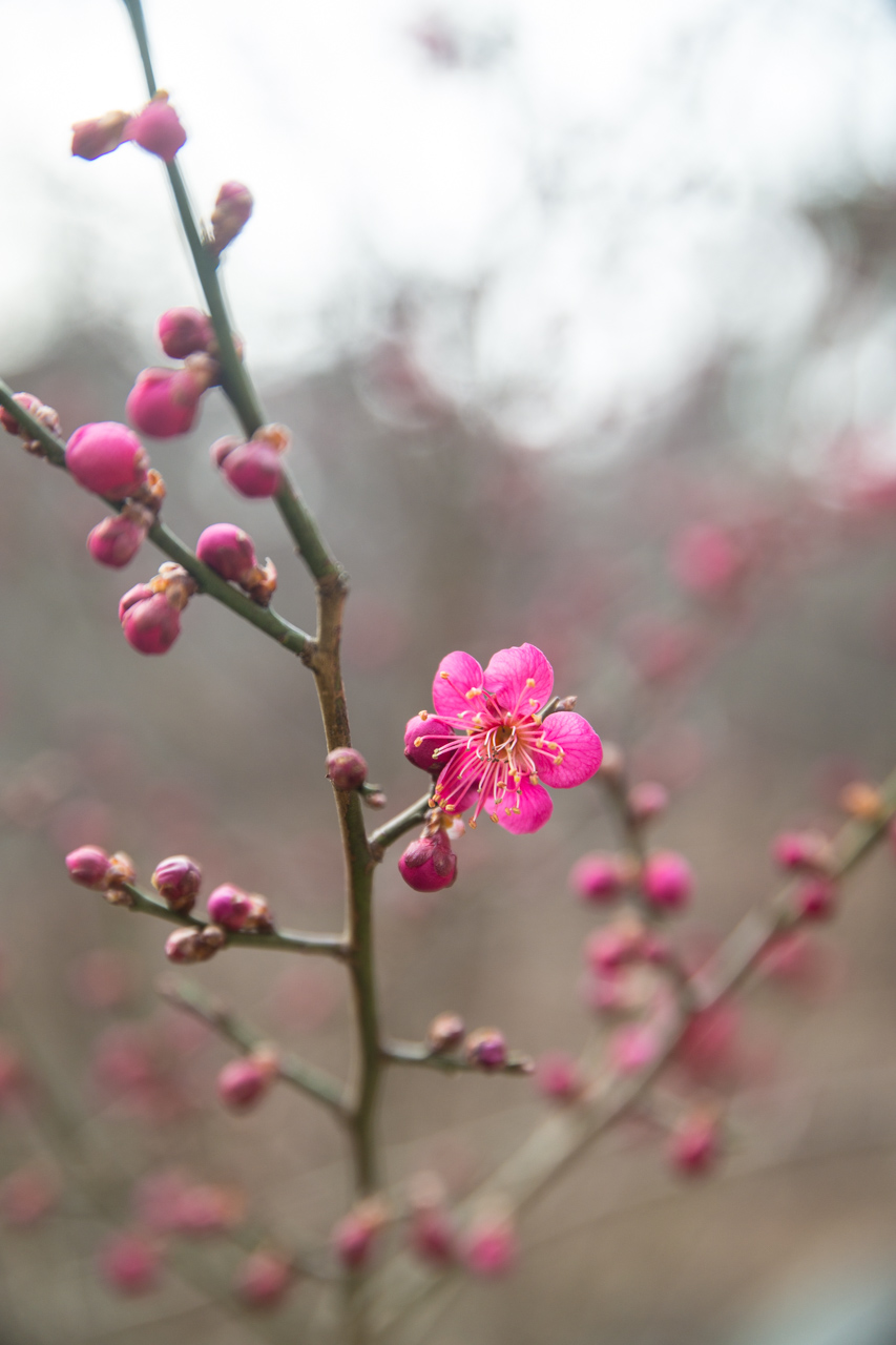 2016년 3월 봄 풍경-9608.jpg
