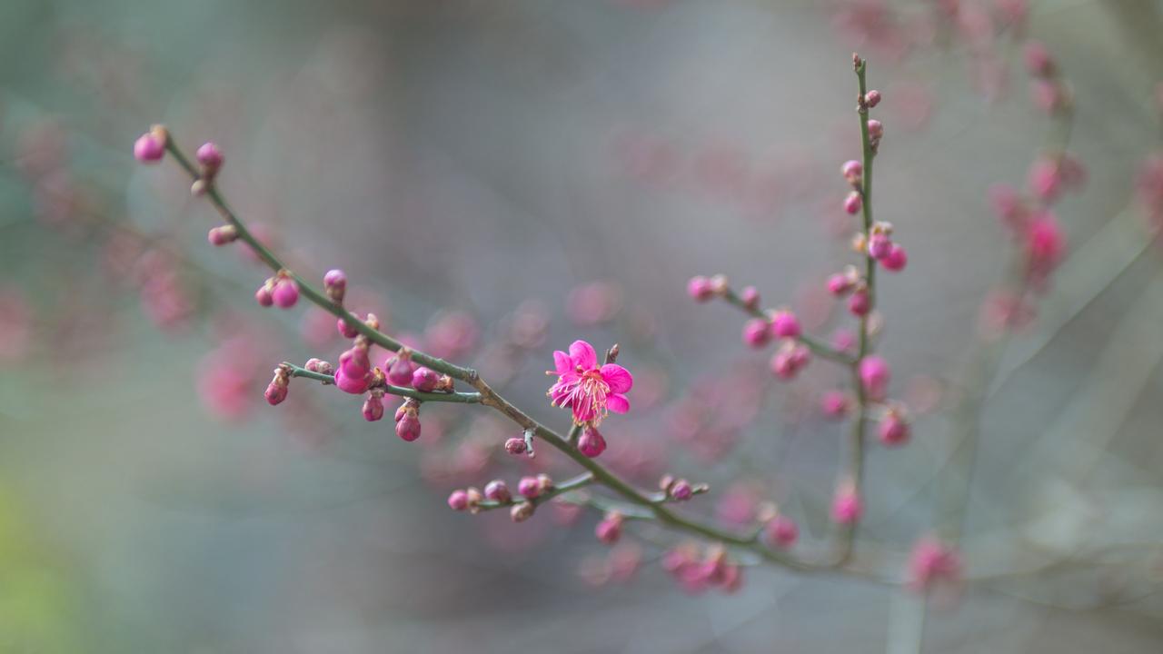 2016년 3월 봄 풍경-9599.jpg