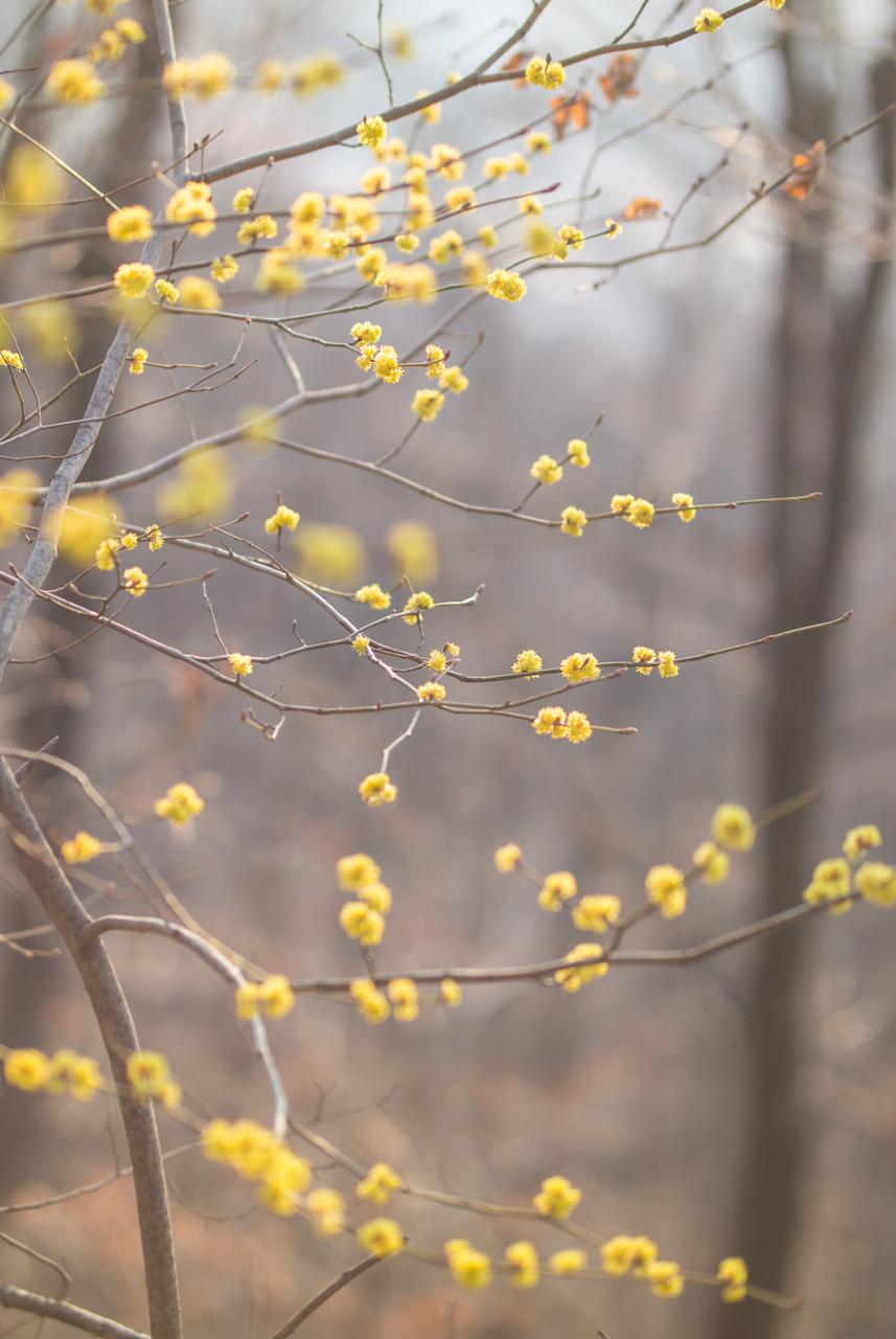 2016년 3월 봄 풍경-9660.jpg