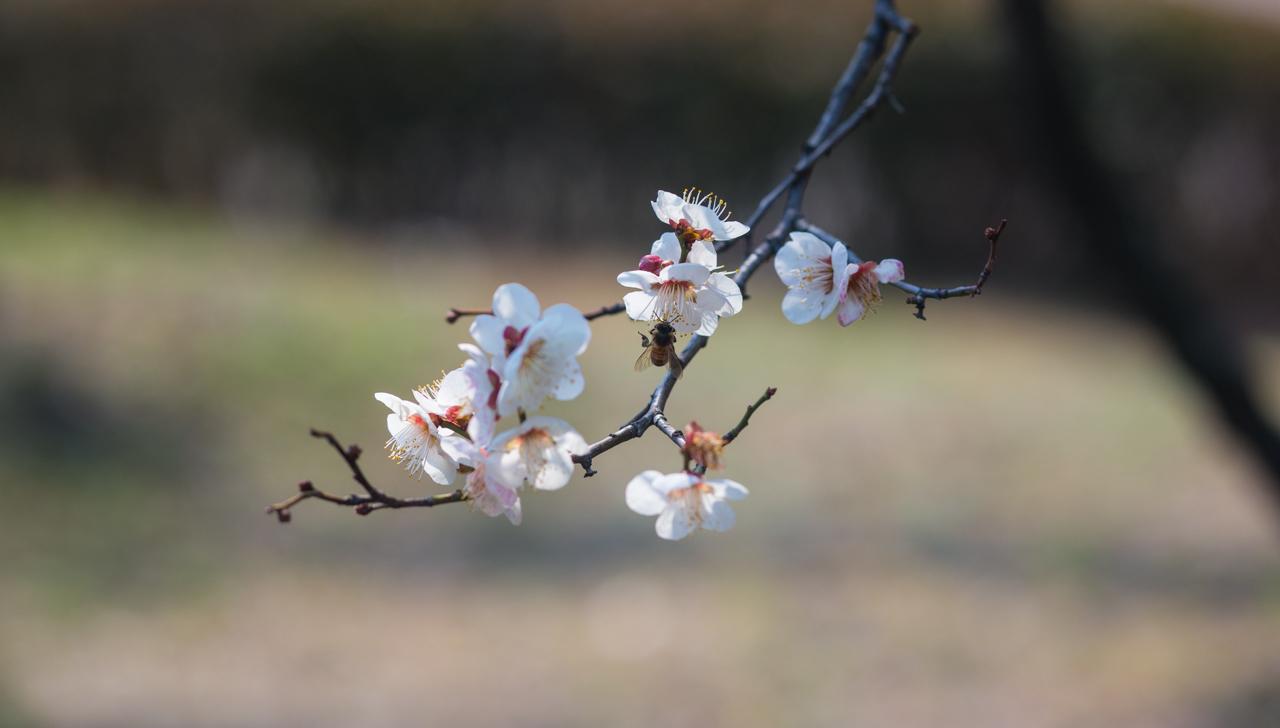 2016년 3월 봄 풍경-9406.jpg