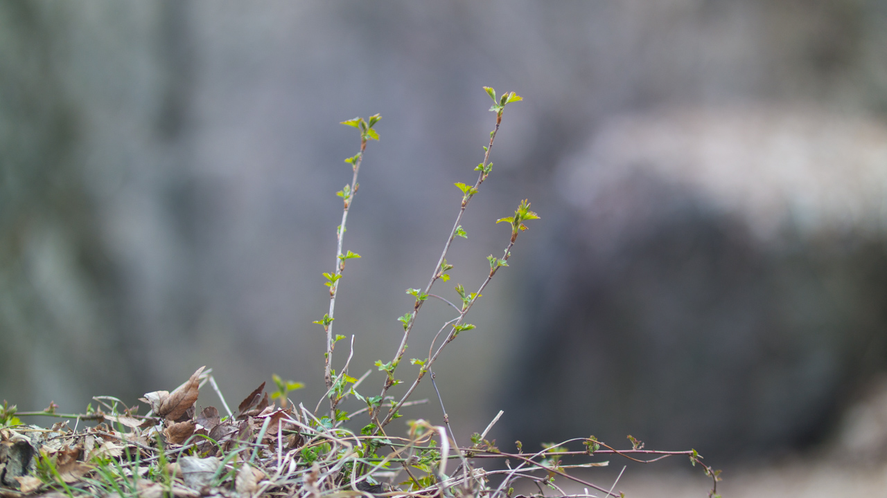 2016년 3월 봄 풍경-9535.jpg