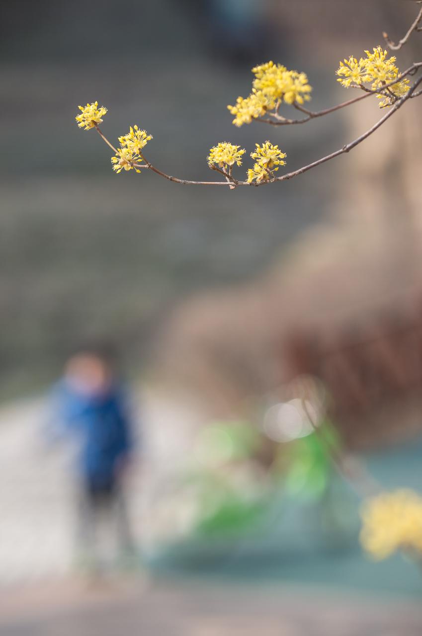 2016년 3월 봄 풍경-9452.jpg