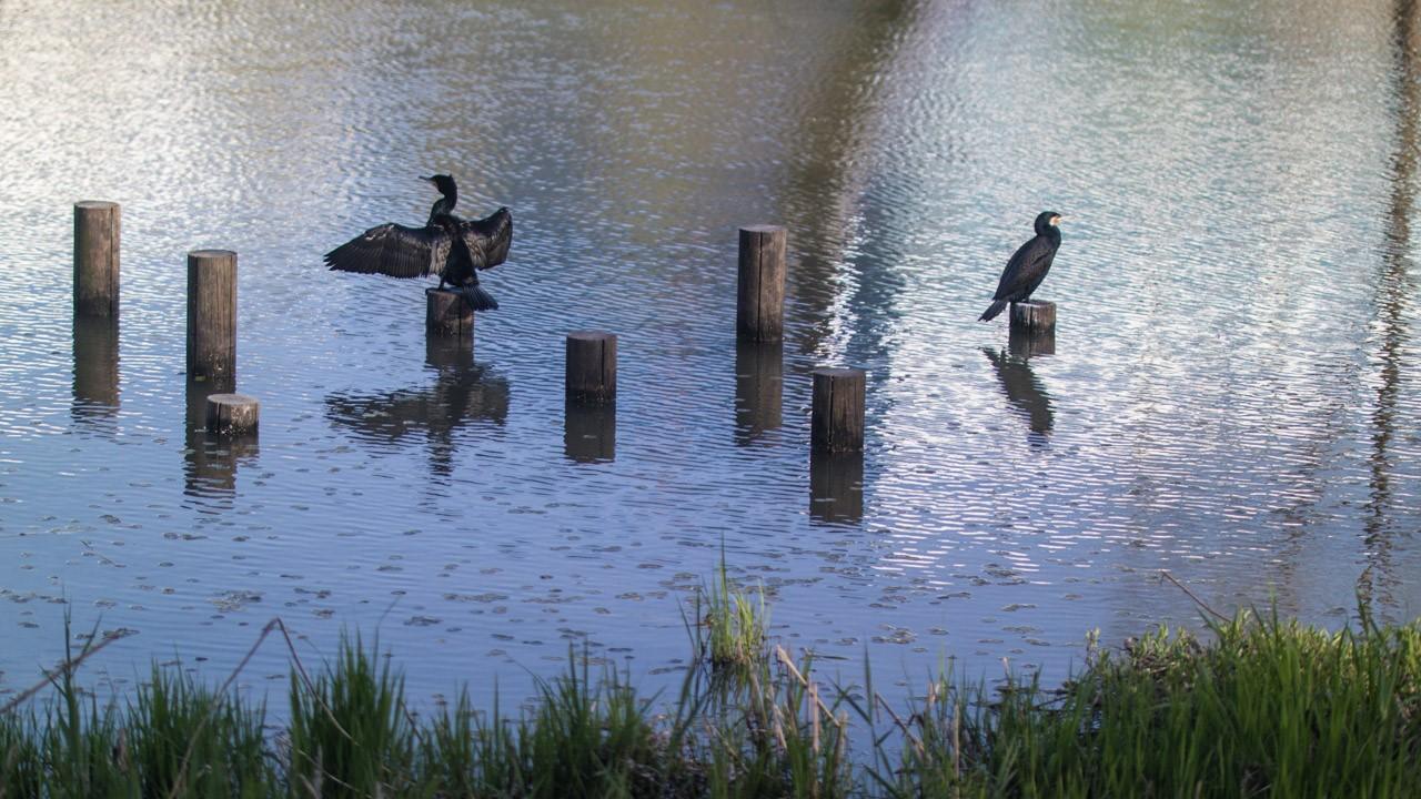 날 좋은 날 호수공원에서-0319.jpg