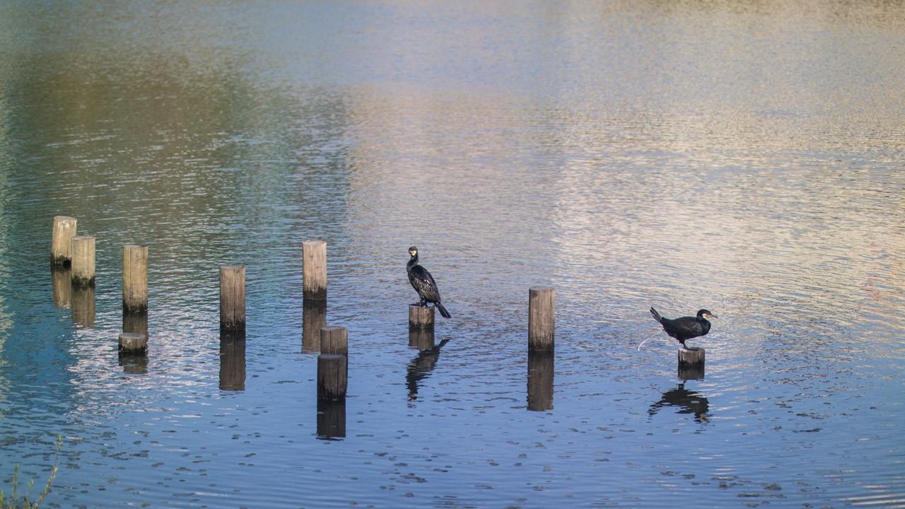 날 좋은 날 호수공원에서-0315.jpg