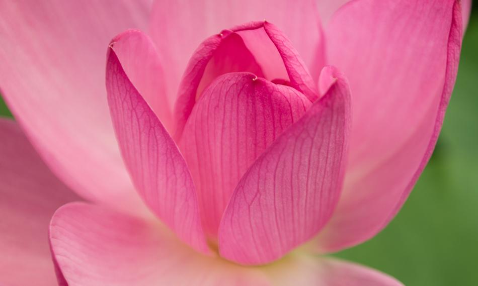궁남지 연꽃-4496.jpg
