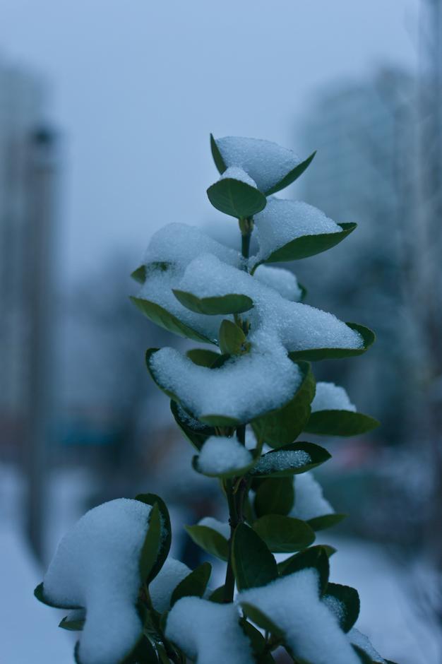 눈온날-3412.jpg