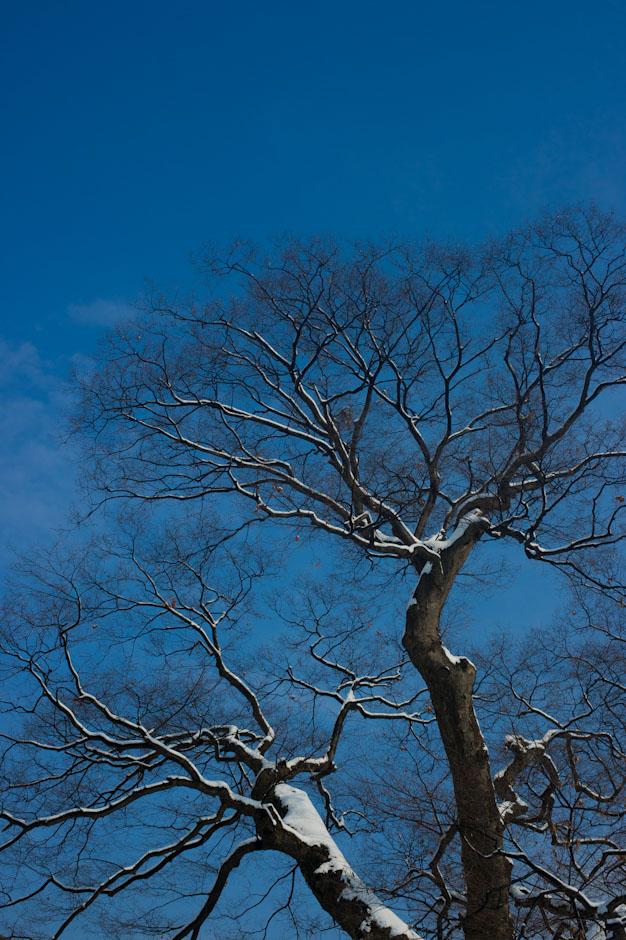 눈온날-3431.jpg