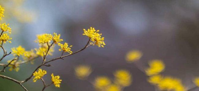 봄이 온 풍경 - 석성산에 오르는 길에 담아본 봄꽃들
