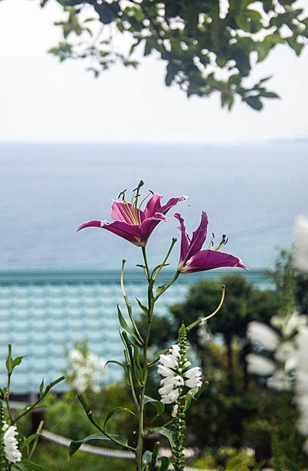 동해 묵호등대에서 담아본 나리꽃-8438
