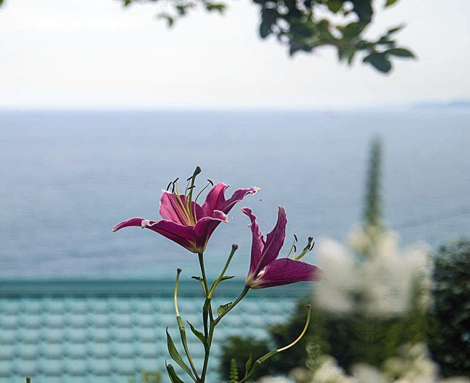 동해 묵호등대에서 담아본 나리꽃-8451