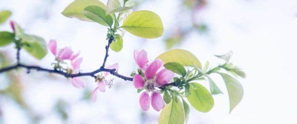 이태주의 풀꽃이 생각나게 하는 모과꽃을 담아 보다 14