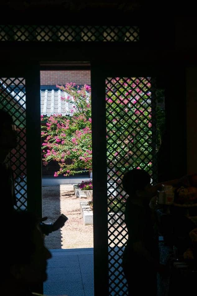낙원가든 실내에서 바라본 밖 풍경 배롱나무가 보이는 풍경-9801