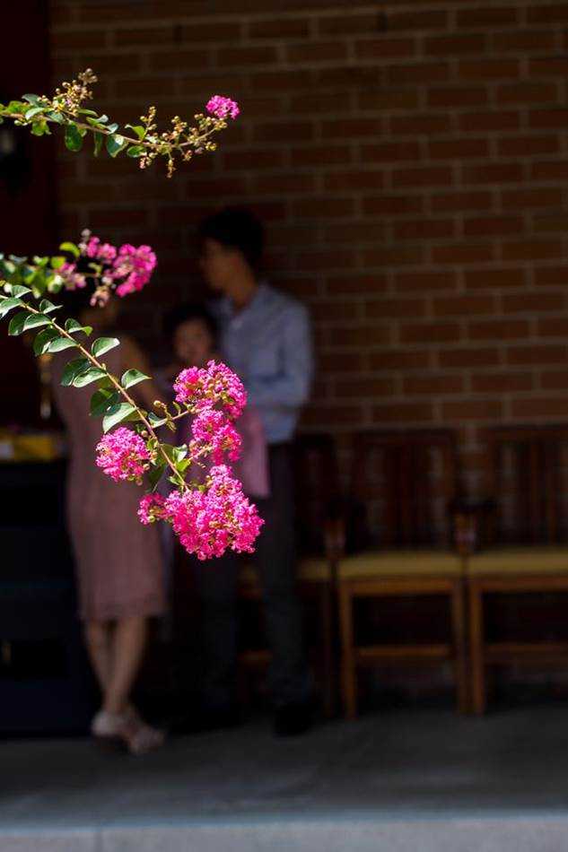 배롱나무꽃 그리고 유빈가족-9972