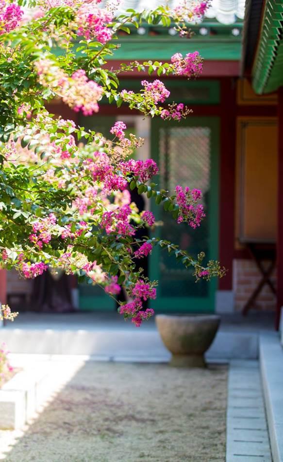 배롱나무 꽃이 있는 풍경-0020