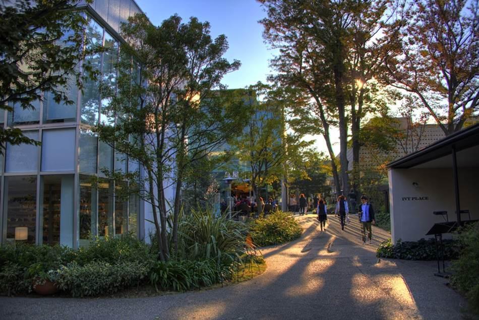 석양의 햇살이 비추는다이칸야마 츠타야서점, 숲속의 도서관이라는 지향점을 조금 더 보여줄 수 있는 사진으로 인용해 봄,- Image - 代官山 蔦屋書店、三周年を記念してHDR撮影