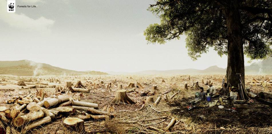 %eb%b2%8c%eb%aa%a9-%eb%b0%a9%ec%a7%80-%ec%ba%a0%ed%8e%98%ec%9d%b8-forests-for-life-01