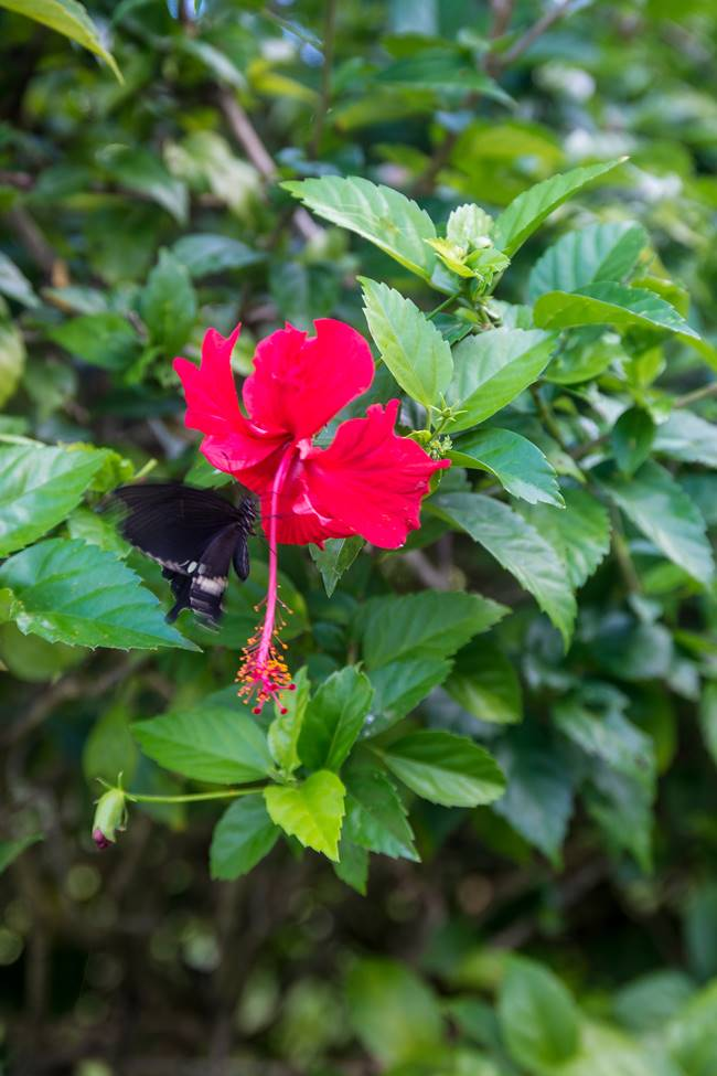 얼렁뚱땅 다녀온 괌(GUAM) 여행기 – 괌에서 담은 아름다운 꽃 이야기 1