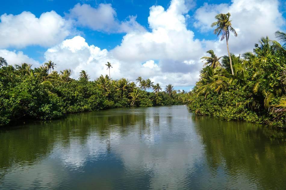 정글 리버 쿠르즈(riverboat cruise)중에 담은 탈로포포 강(Talofofo River)의 풍경들