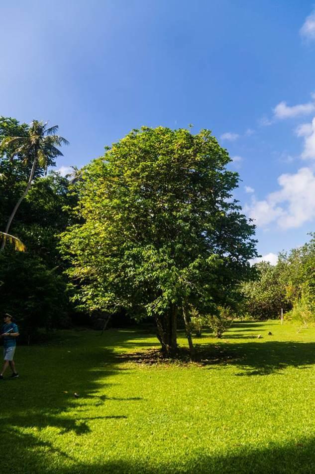 얼렁뚱땅 다녀온 괌(GUAM) 여행기 – 괌의 아름다움과 전통 문화가 가득한 정글 리버 쿠르즈(Riverboat Cruise) 50