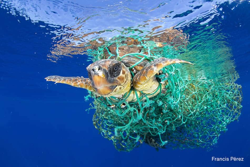 2017 WORLD PRESS PHOTO' Single 수상작 그물에 감긴채 수영하고 있는 바다거북이 인간이 버린 스레기가 초래한 비극