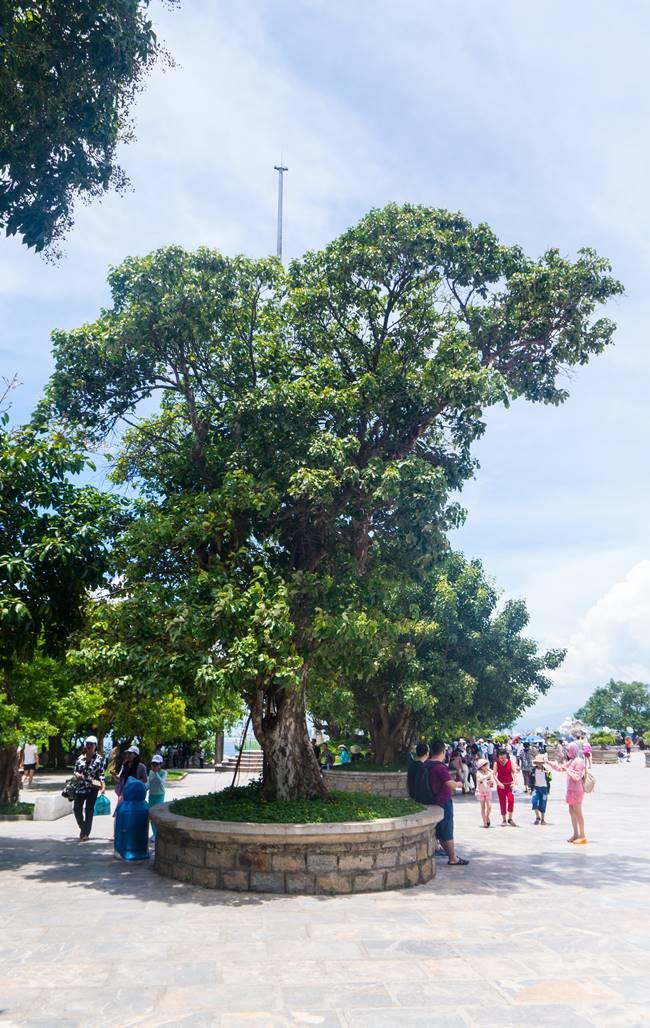린응사 경내의 멋진 나무들-6089