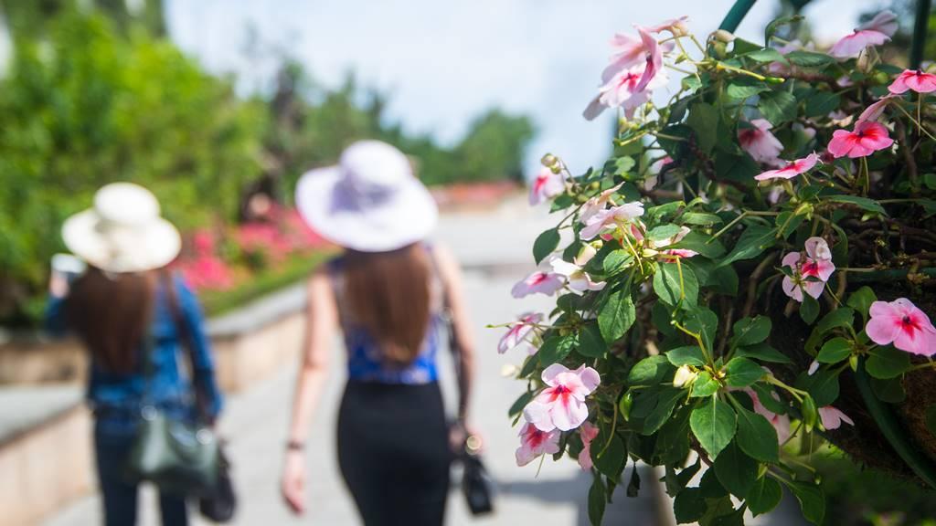 베트남 다낭 여행 - 바나 힐(Bana Hill) Happiy Garden 꽃과 여인-4046