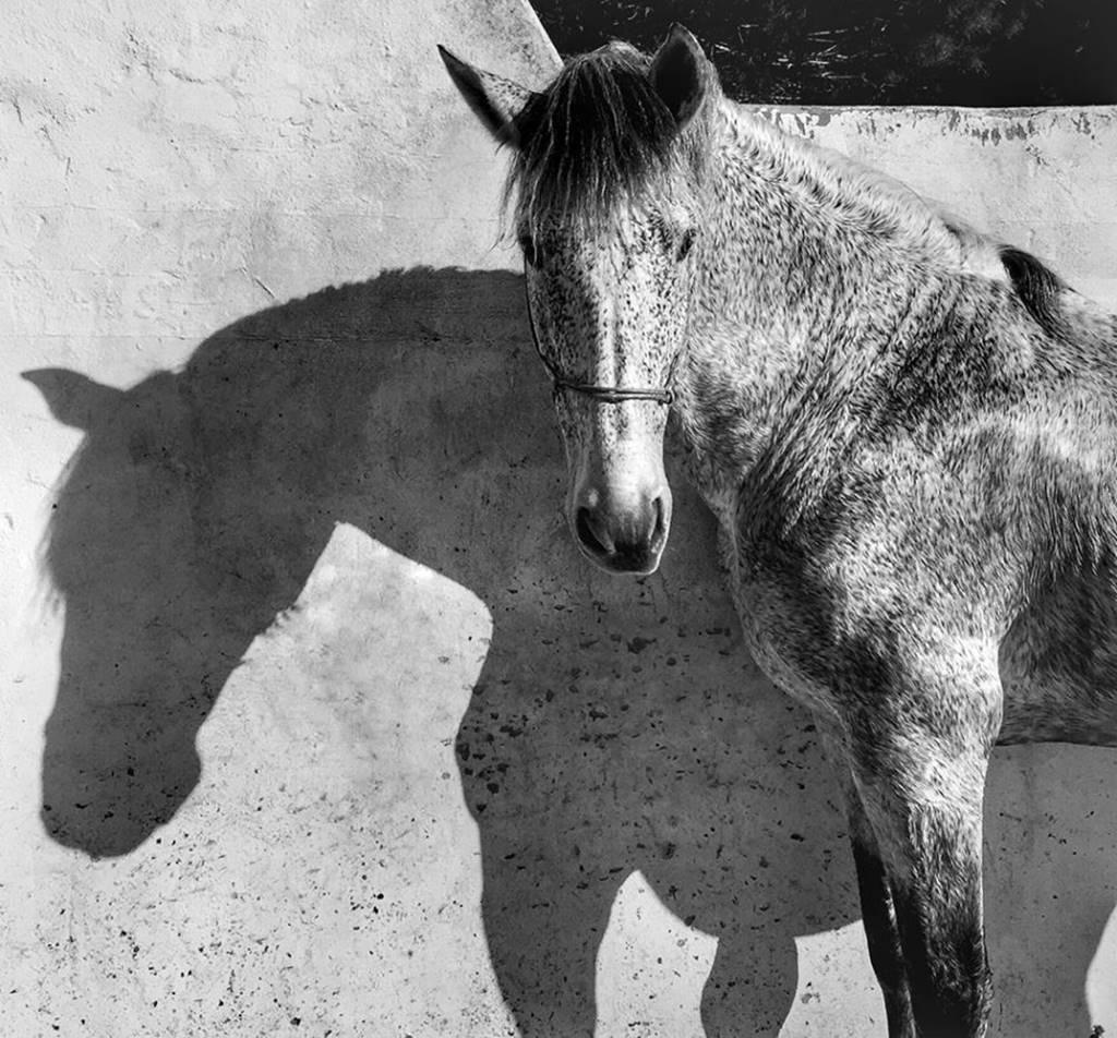 2017년 아이폰으로 담은 최고의 사진_아이폰 10주년 IPPAWARDS 2017 1st-Animals_francesca-tonegutti-2-950x883