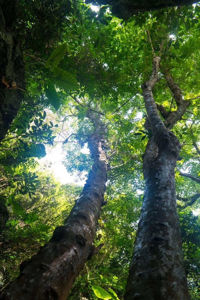 오행산(마블 마운틴) 정주동굴 가는길의 아름들이 나무-5909