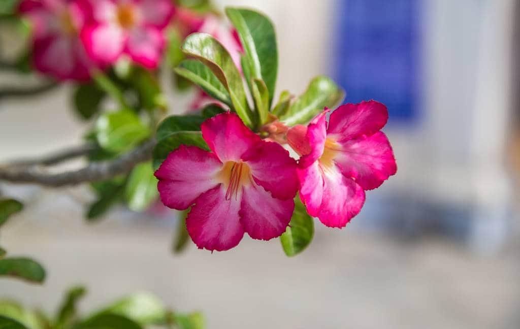 베트남 다낭 여행기 #17 –  베트남 다낭과 호이안에서 만난 아름다운 꽃들 10