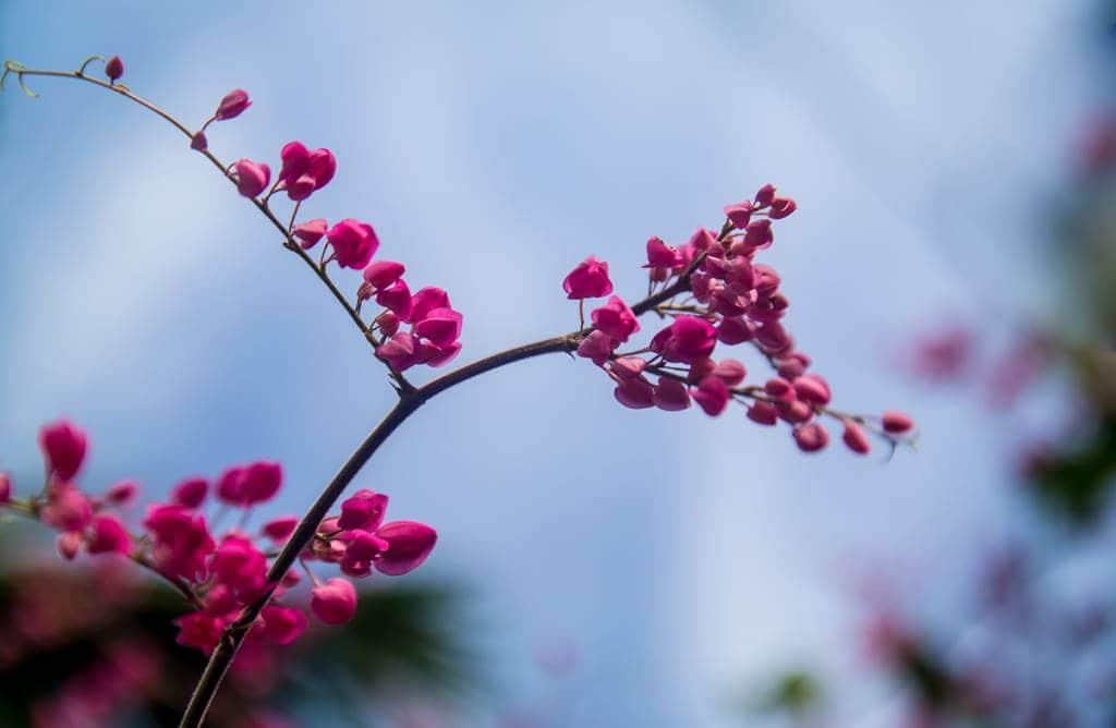 다낭에서 만난 꽃