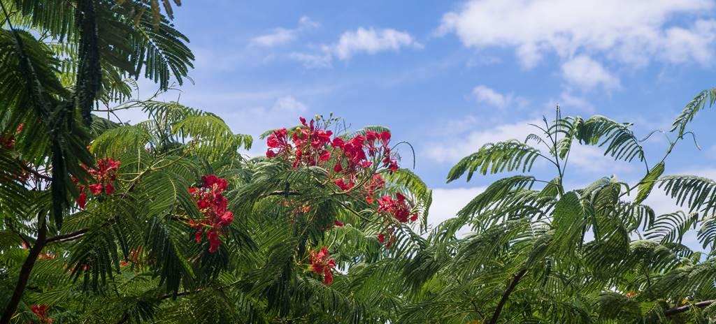름다운 꽃나무 화프잉