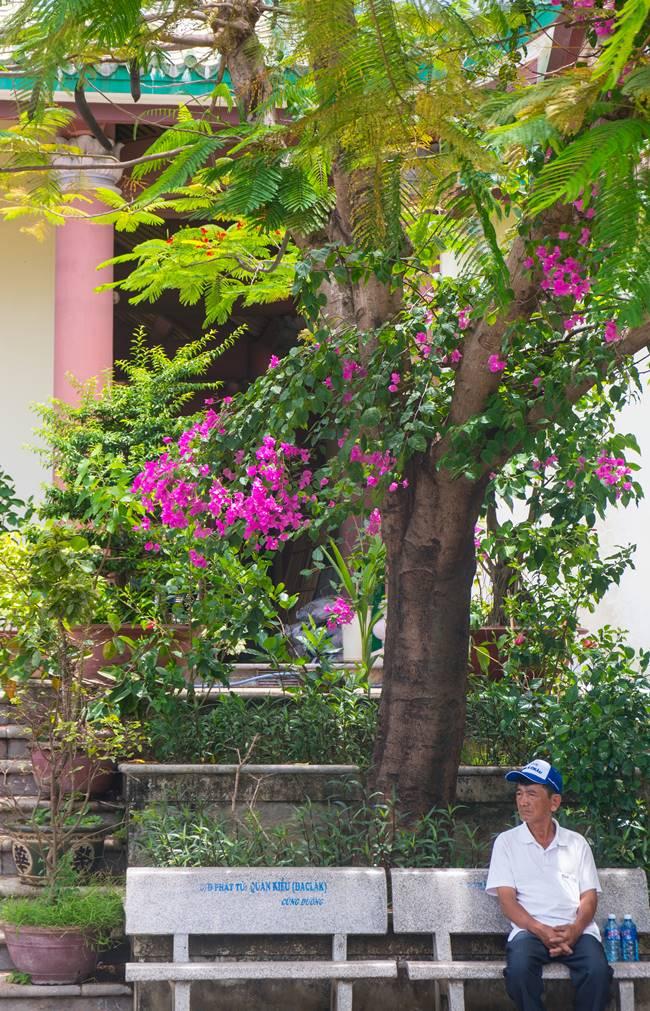 다낭 여행에서 지천으로 피어있던 꽃인데 반알 꽃(hoa Bang Lang)이라고 하는 듯,