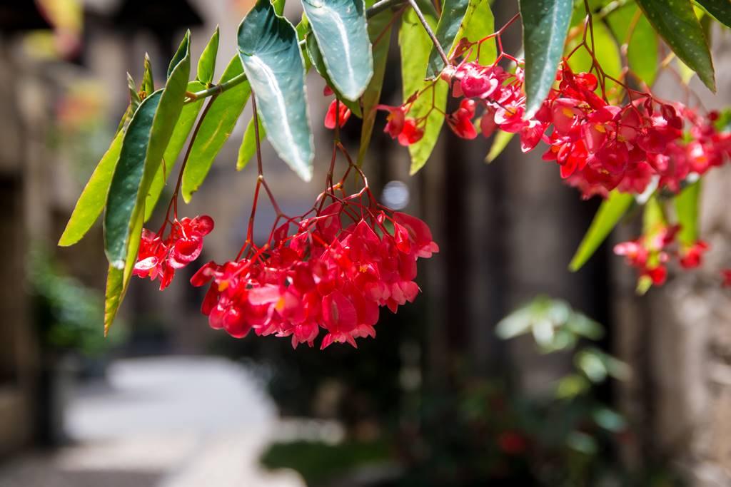 베트남 다낭 여행기 #17 – 베트남 다낭과 호이안에서 만난 아름다운 꽃들 11