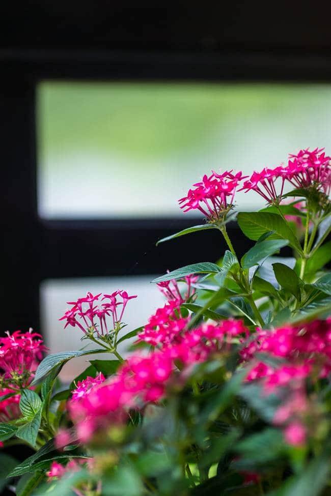 바나 힐(Bana Hill)로 가는 케이블카를 바라보는 꽃