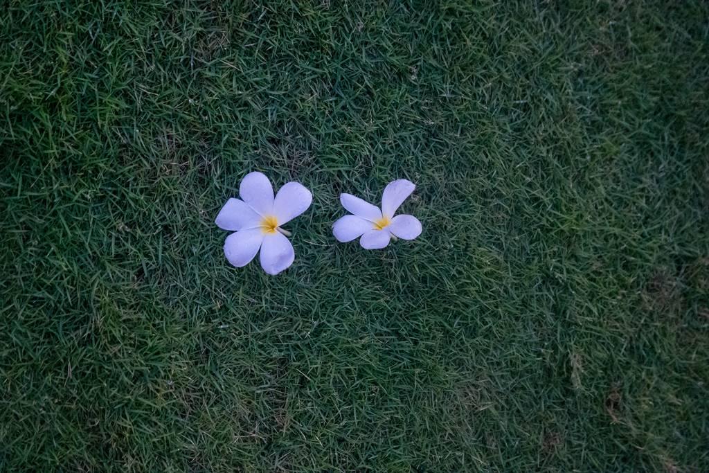 베트남 다낭 여행기 #17 – 베트남 다낭과 호이안에서 만난 아름다운 꽃들 12